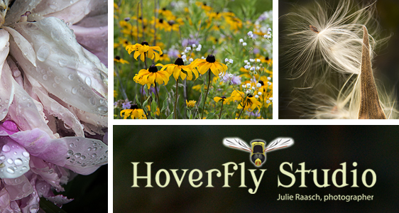 Hoverfly Studio email art
